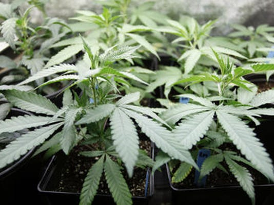 635794021064325184-marijuana