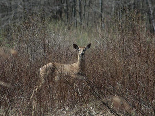 Look for deer and signs of other wildlife on a Night Hike at Primrose Farm with the Great Swamp Watershed Association on Friday night.