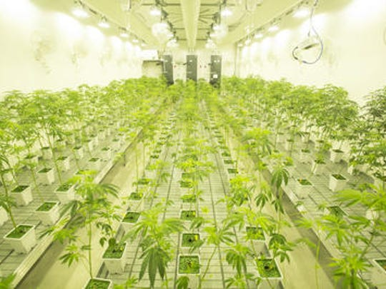Canndescent, a new production plant in Desert Hot Springs,
