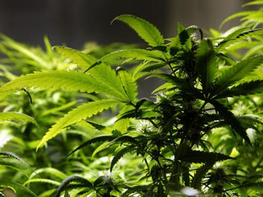 The Cathedral City Council voted to lower the tax rate on medical marijuana manufacturing and cultivation.