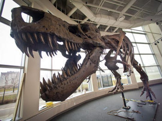 This life-sized skeletal cast of Sue, a Tyrannosaurus rex, was assembled at the Science Center of Iowa in Des Moines in 2013. The real fossil skeleton of the dinosaur resides at The Field Museum in Chicago.