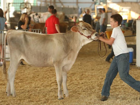 Livestock are a big part of the Wilson County Fair.