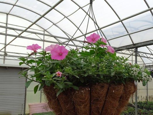 Schmittuz Gardens grows and sells a variety of flowers