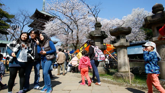 Visitors take a photo at Toshogu temple where cherry blossoms are in full bloom, in Ueno park in Tokyo, on April 2, 2015.