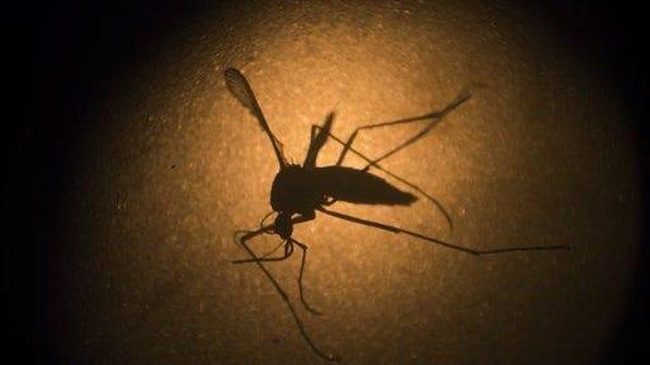 Zika.mosquito