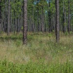 Florida Forest Service responds to wildfire on Barrineau Park Road