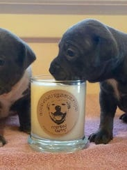 Puppies take a whiff of Good Juju Rescue Fund's candle,