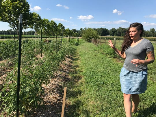 Lauren Giordano looks over her tomatoes on her small