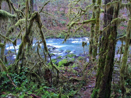 Side view of the upper South Santiam River.