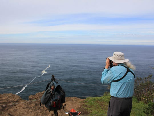 Jim Border, who volunteers to help members of the public spot whales during Spoken Here Whale Watching Week on the Oregon Coast, scans the horizon for signs of spouts from the tip of Cape Lookout.