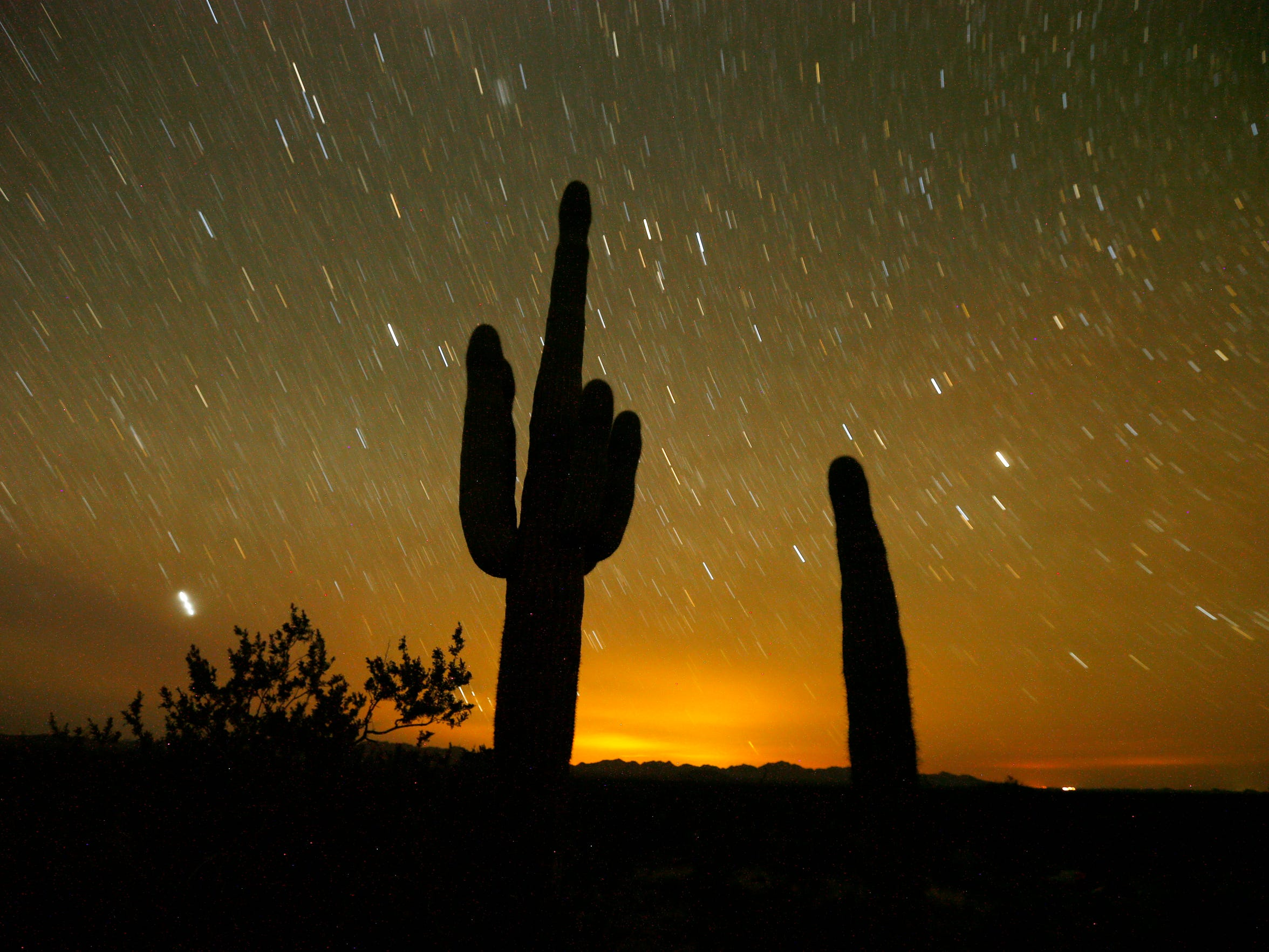 A saguaro cactus stands under the stars in the Cabeza