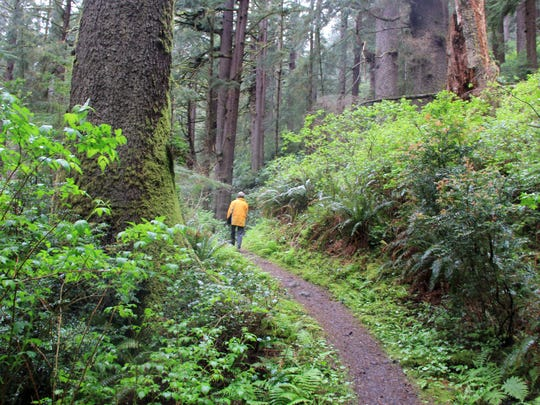 The 6.2 mile Gwynn Creek Loop takes hikers through old-growth forest.