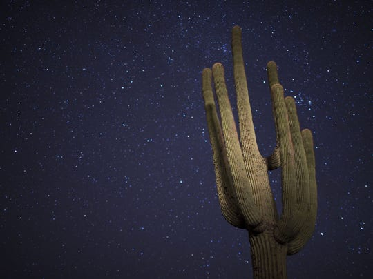 A saguaro is illuminated by headlights from passing