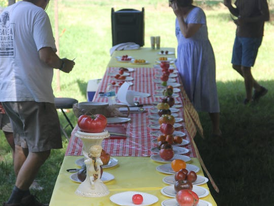 Contestants display their organic tomato offerings at a previous Tomato Feastival at Turkey Hill Farm.