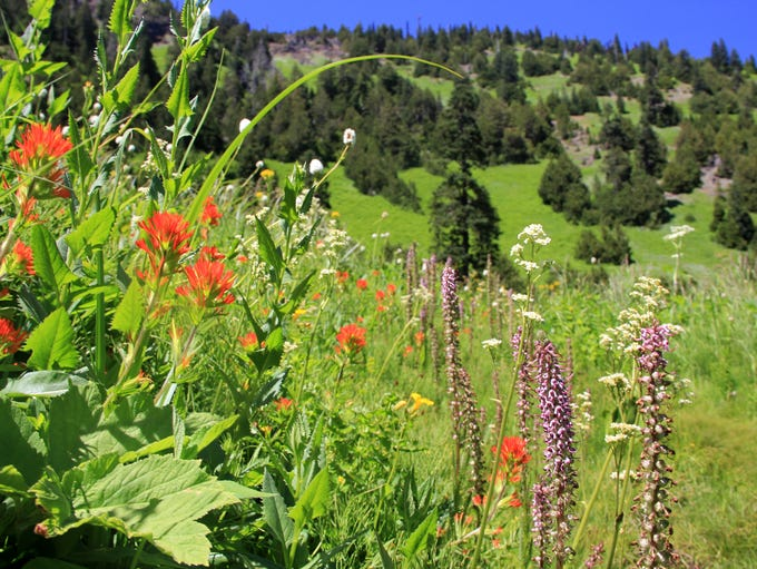 Wildflowers highlight Echo Basin Trail in the Old Cascades