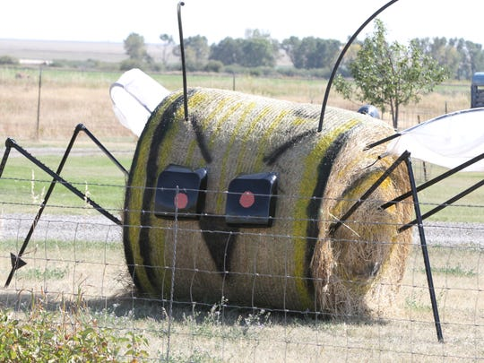 Hay! Buzz off on the Montana Bale Trail