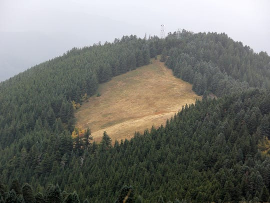 This patch of meadow on Marys Peak is being invaded