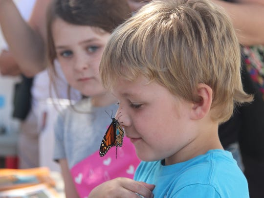 A tagged monarch lifts off Braeden Beauchamp's nose at the St. Marks Lighthouse