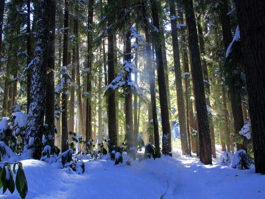 The Diamond Creek Falls Trail leads through a snowy