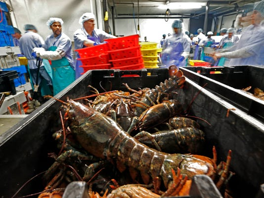 635911360460146833-Lobster-Processing-Simc.jpg