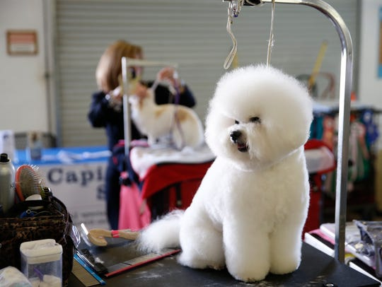 ​ Scenes from a previous Ochlockonee River Kennel Club dog show, which starts Wednesday at the North Florida Fairgrounds.   ​