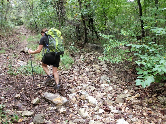 Some of the hiking trails at Busiek State Forest are