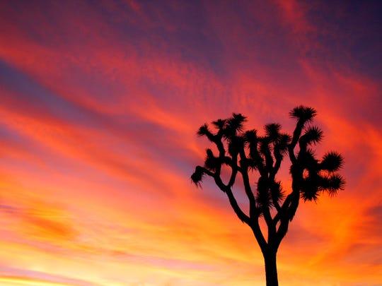 Joshua Tree Sunset_credit NPS-