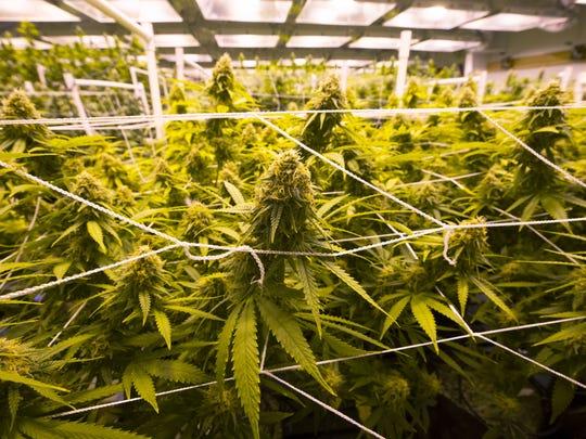 Arizona business leaders worry that recreational marijuana