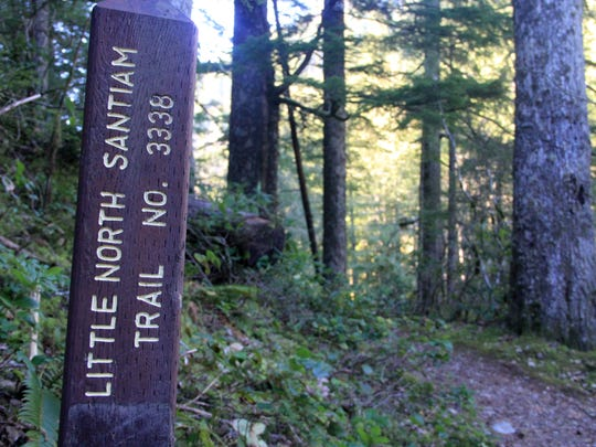 Find the Little North Santiam Trail at the Shady Cove Trailhead.