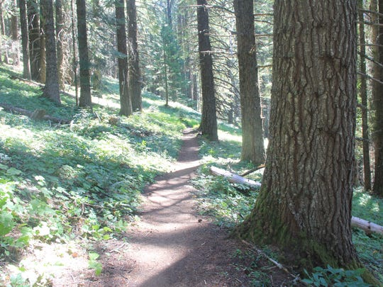 Erma Bell Lakes Trail in the Three Sisters Wilderness begins amid a forested scene.