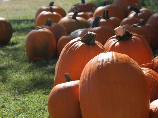 Approximately 2,600 pumpkins were delivered at the St. Peter Lutheran Church.