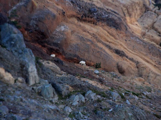 Mountain goats are spotted on the cliffs around Three