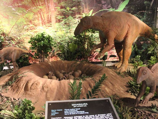 These are just some of the dinosaurs you will meet at the Jurassic Journeys exhibit at Discovery Park of America.