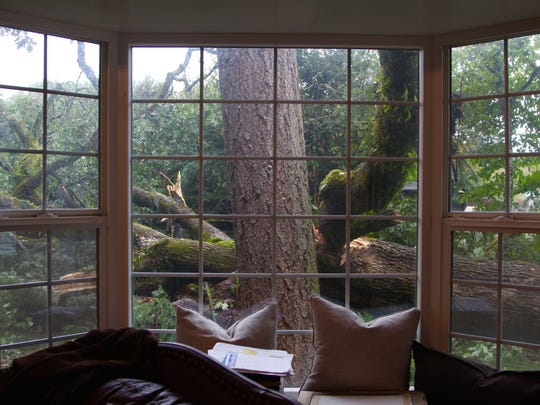 The view from the living room of Jodi and Steve Hack, Salem residents who were awoken at 2 a.m. to find their white oak tree fallen in their yard on Friday, Oct. 7.