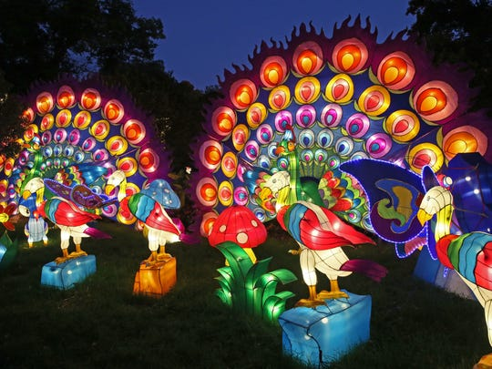 A display features peacocks at China Lights at Boerner