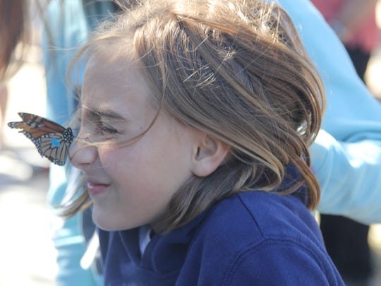 Monarch butterflies are tagged and released at St. Marks National Wildlife Refuge.