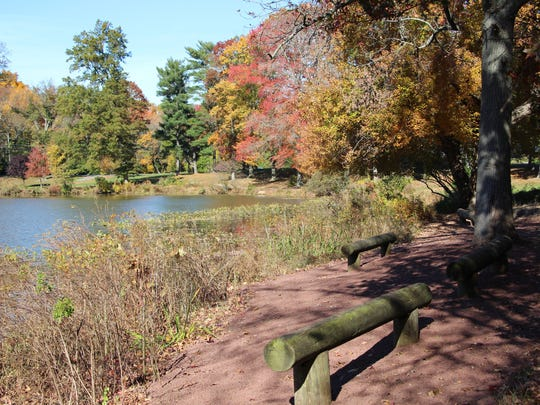 The view of fall foliage surrounding Strawbridge Lake in Moorestown is better now that the foreground trail has been cleared of high brush by for an Eagle Scout project of Troop 44