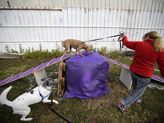 Stacy Schroeder leads her dog, Sage, across a ramp as The C-K9 Club holds an open house to welcome dogs and their owners for a social afternoon Saturday, November 19, 2016, in Neenah, Wisconsin. Ron Page/USA TODAY NETWORK-Wisconsin