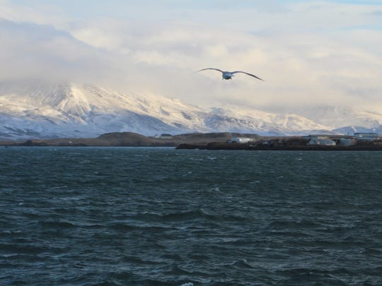 Richard Hoben of Pineville took a photo of seagull flying over the Atlantic with the mountains of Iceland in the background.