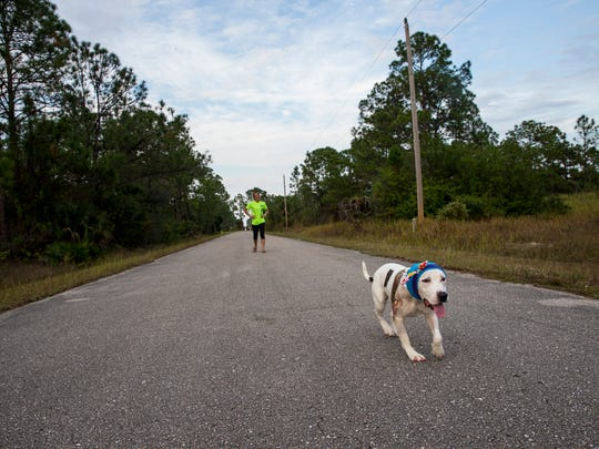 Abigail runs during her daily walk with her foster mom Victoria Frazier, 31, along the road at her home in Lehigh Acres, Fla., on Thursday, Dec. 8, 2016. Abigail was rescued by Frazier from a Miami dog shelter after being found severely abused and injured, most likely from a dog fighting ring.