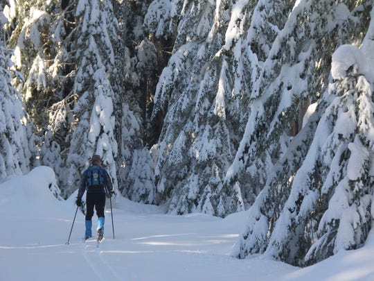 Jim Todd of the Willamette Chapter Oregon Nordic Club skis among big trees near Big Springs Sno Park  on Dec. 28, 2016.