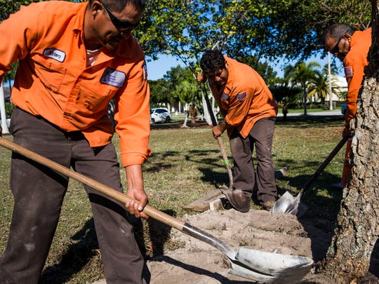 A tree is planted as a part of the Arbor Day Celebration at Leigh Plummer Park on Friday, Jan. 20, 2017. The event is hosted by the Beautification Committee of Marco Island