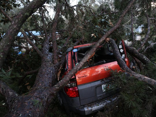A fallen tree on Circle drive lays across the road,