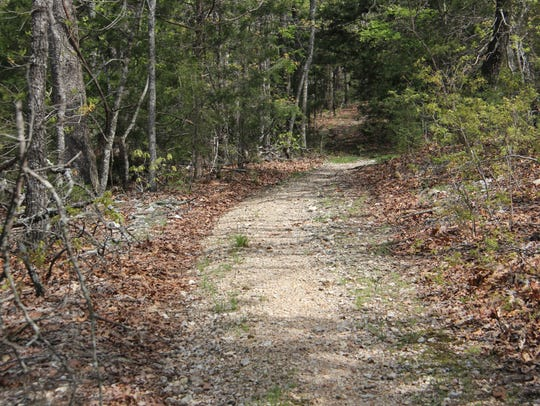 A view of one of the Hercules Glades hiking trails,
