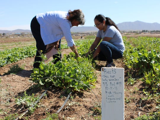 La Cosecha community leader America Terrazas, left, and La Semilla community and youth programs manager Marlene Catherine Yañez, look over beets being grown at the La Semilla Community Farm in Anthony, N.M., on Saturday, March, 18, 2017.