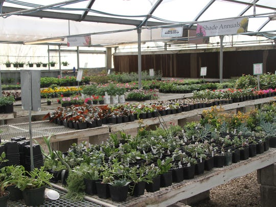 CARC Country Store & Greenhouse offers various types of flowers, flower beds and rose bushes.