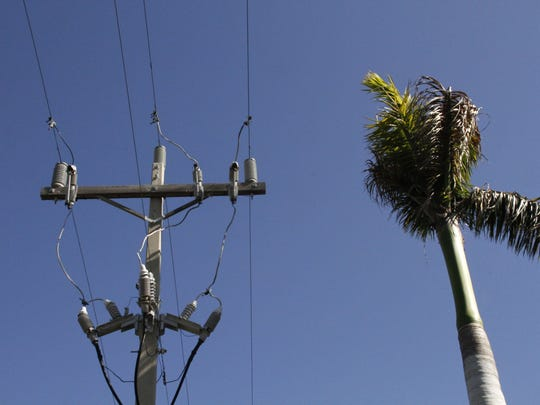 Lee County Electric Cooperative (LCEC) plans on cutting down 14 royal palm trees along Seaview Court in the South Seas Club East Condominium community. The trees are causing power outages and have grown to the point that they can no longer be trimmed away from the power lines enough to prevent future outages, according to an LCEC representative.