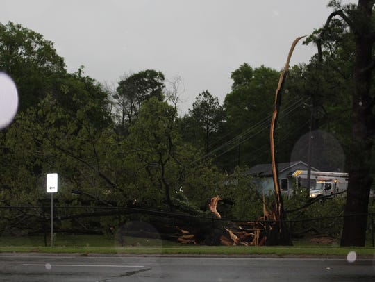 An apparent lightning strike toppled a tree in Bastrop.