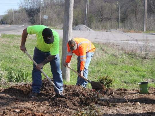 City employees planted forty Knock-Out Rose bushes