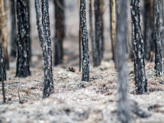 #stockphoto Forest Fire: Burnt